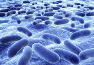 舌苔の細菌