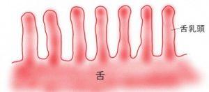 舌苔ができる原因(きれいな舌)